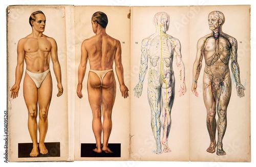 Old vintage male medical anatomy charts Fotobehang
