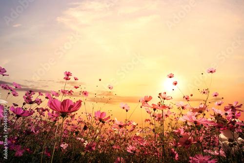 Obraz na płótnie Kwiaty na polnej łące podczas zachodzącego słońca