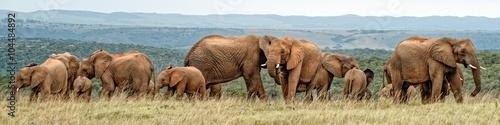 Wallpaper Mural Elephant Herd