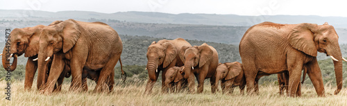 Photo Elephant Herd