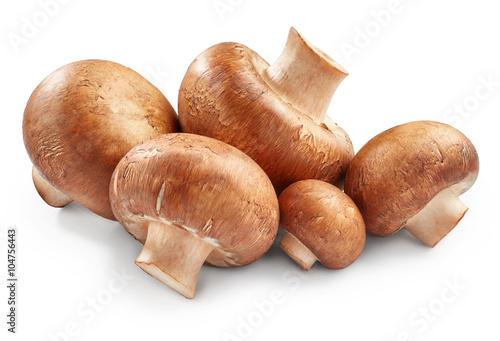 Canvas Print Champignon mushrooms