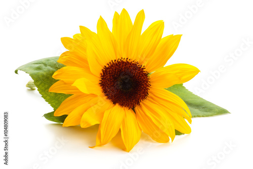 Sunflower with leaves.