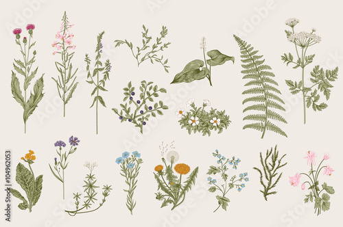 Wallpaper Mural Herbs and Wild Flowers