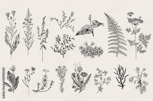 Photo Herbs and Wild Flowers