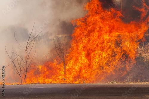 wildfire Fototapeta