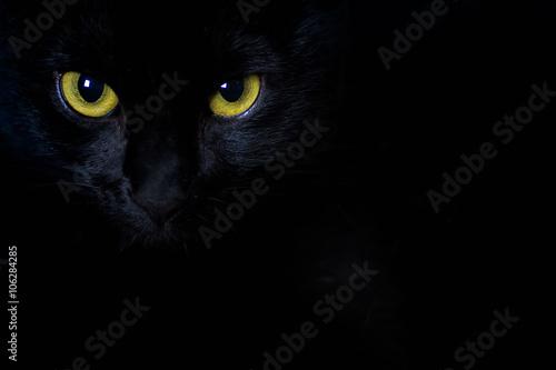 Fotografia Golden stare of a black cat