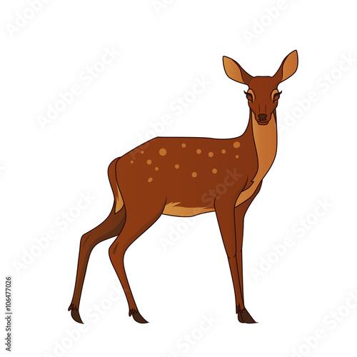 Fotografia Deer isolated