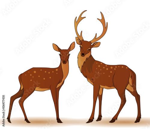 Canvas-taulu Couple of deers isolated