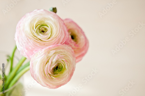 Photo Bouquet of ranunculus in vase in white, pink and beige pastel colors