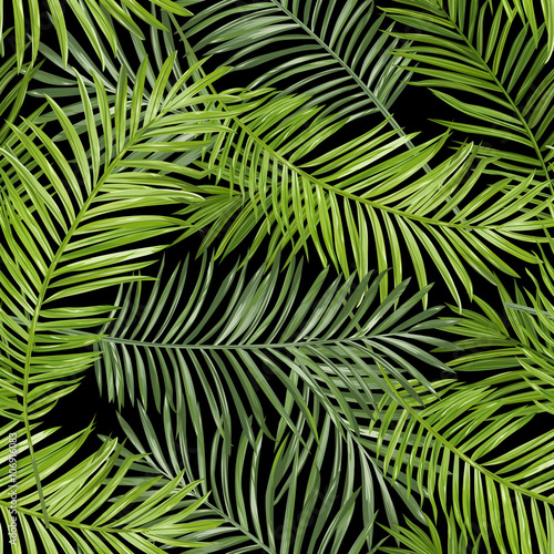 Fototapeta Tropikalna zielona palma na ciemnym tle