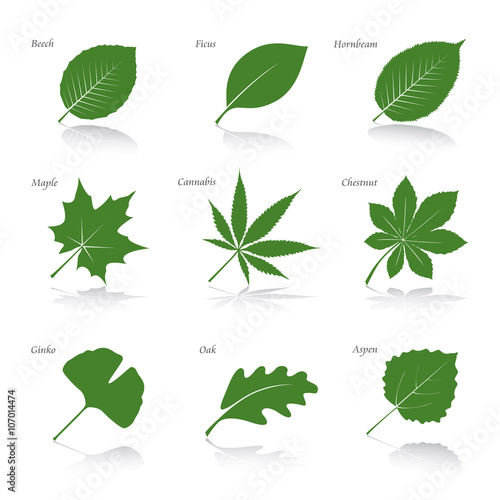 Fotografie, Tablou Collection of Green Leafs. Vector Illustration.