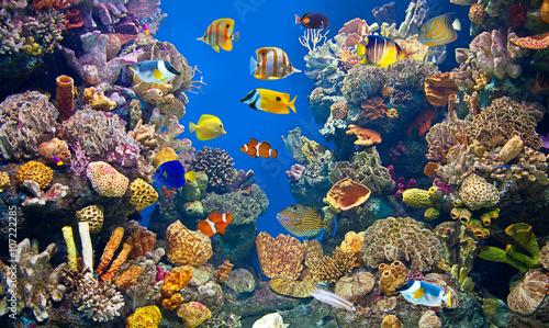 Slika na platnu Colorful and vibrant aquarium life