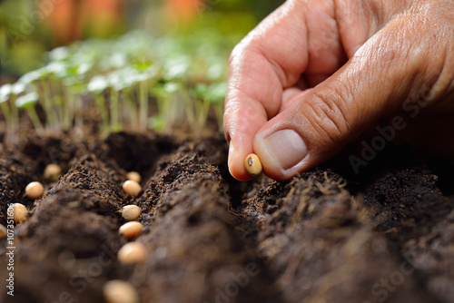 Canvas Print Farmer's hand planting seeds in soil