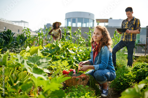 Urban farmers harvesting vegetables from the rooftop greenhouse garden