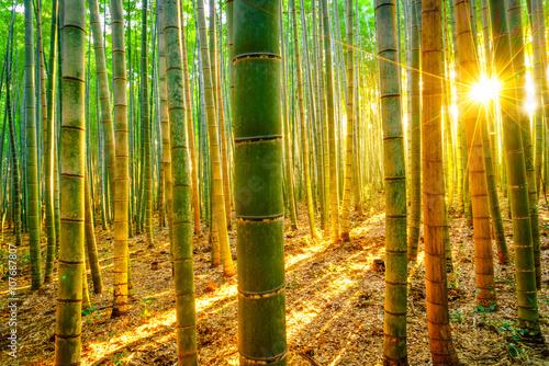 Fototapeta premium Bambusowy las z pogodnym rankiem