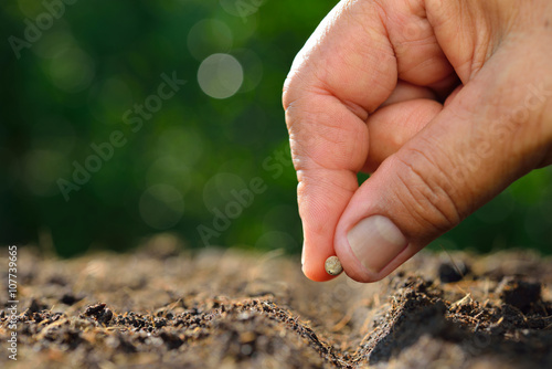 Canvas Print Farmer's hand planting a seed in soil