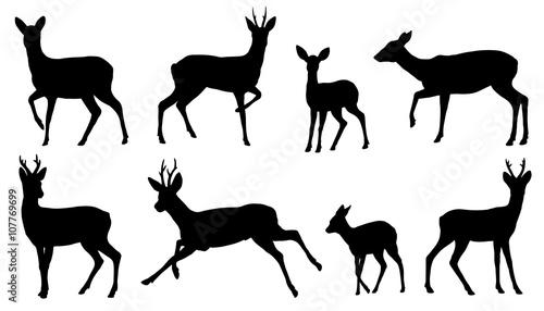 Photo roe deer silhouettes