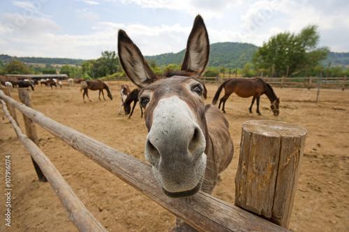 Photo Funny donkey