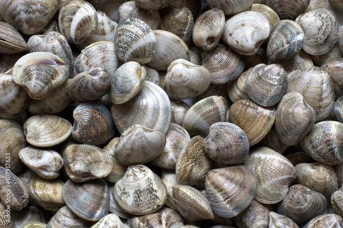 Mussels, clams, all the fresh sea Tapéta, Fotótapéta