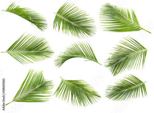 Foto coconut leaf