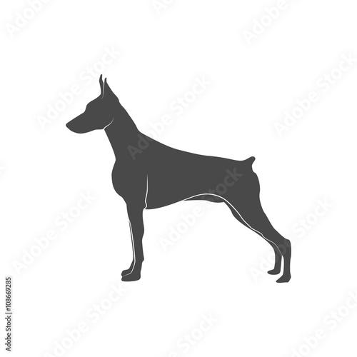 silhouette of the dog - doberman. Fototapeta
