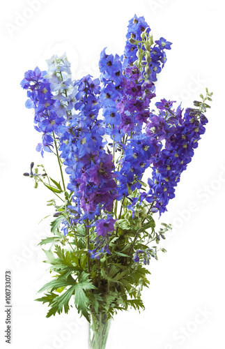 Bluebells bunch isolated on white Poster Mural XXL
