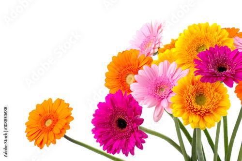 Slika na platnu Bunte Blumen - Gerbera - Freisteller
