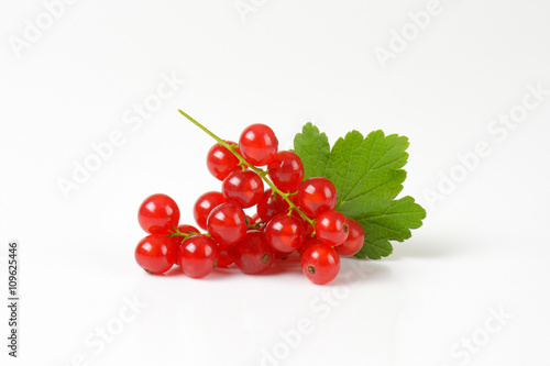 Canvas Print Sprigs of red currant berries