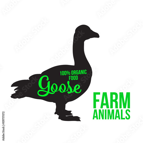 Fotografia Black goose with lettering, poultry, vector illustration sketch, farm feathered