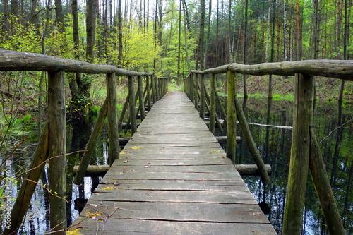 Fotografie, Tablou footbridge path on trail in forest