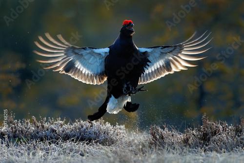 Canvas-taulu Flying bird