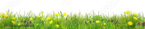 Fotografia Herrlich schlichte Wildblumenwiese vor Weiß