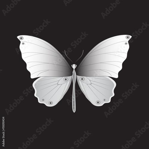 Photo Iron Butterfly, Vector illustration.
