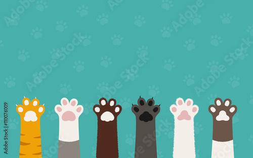 Photo cat paws