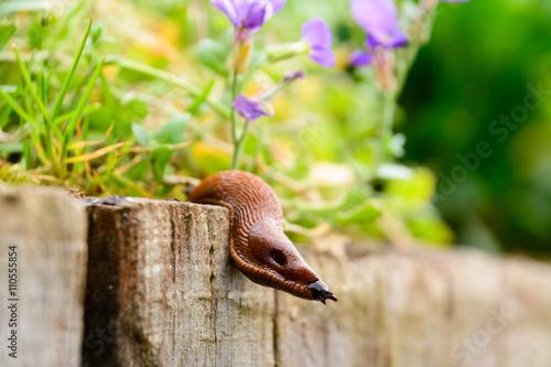 Schnecke im Blumenbeet