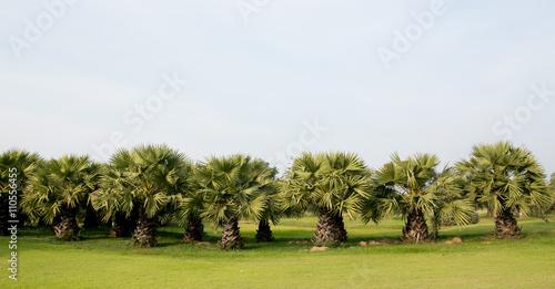 Fotografia Palm tree