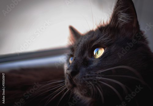 Fotografia Black cat