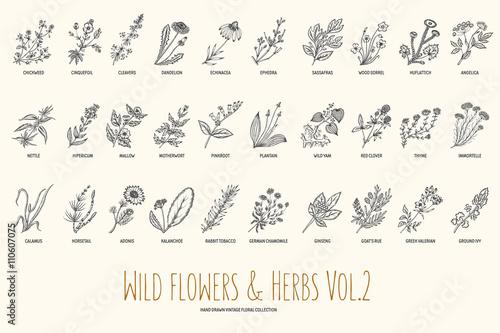 Wild flowers and herbs hand drawn set Fototapet