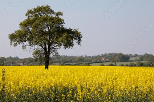 фотография Rape in the Essex countryside