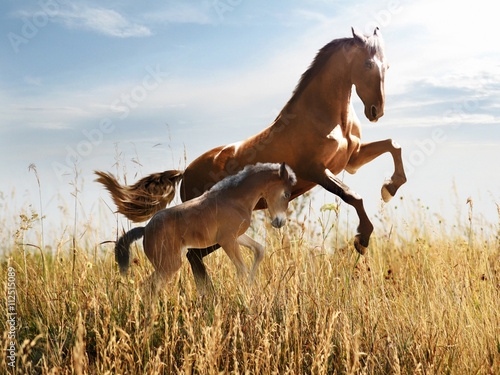 Leinwand Poster horse with a foal skips in the tall grass
