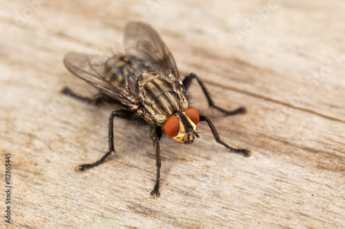 live house fly