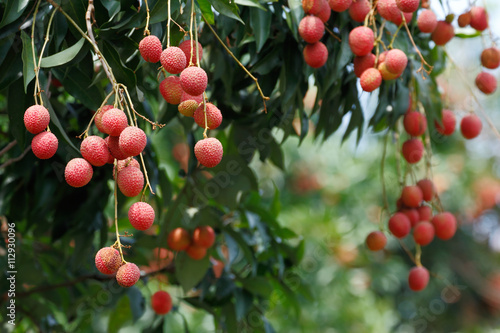 Lychee (Litchi chinensis) the tropical and subtropical fruits native to China
