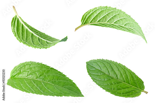Peppermint leaf on white