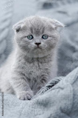 Little kitten on gray cloth