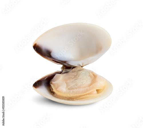 Fényképezés Fresh opened clam