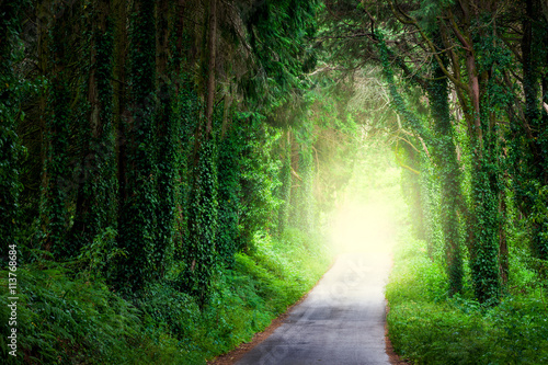 Road in magic dark forest from darkness to light