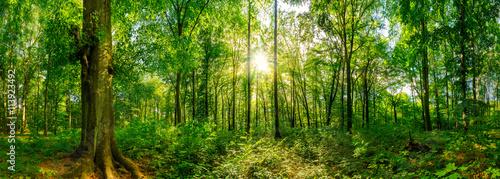 Fototapeta Leśna panorama przy zachodzącym słońcu XXL