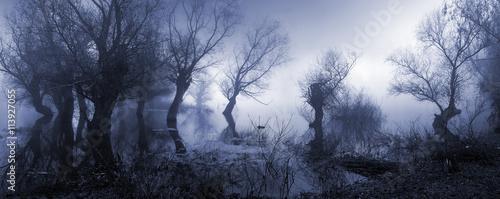 Przerażający krajobraz pokazuje mglistego ciemnego bagno w jesieni.