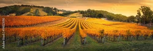 Fotografia Wspaniała winnica na wzgórzach Adelaide