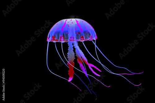 Obraz na plátně jellyfish